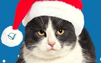 21 PF chtěl jsem vánoční přání…